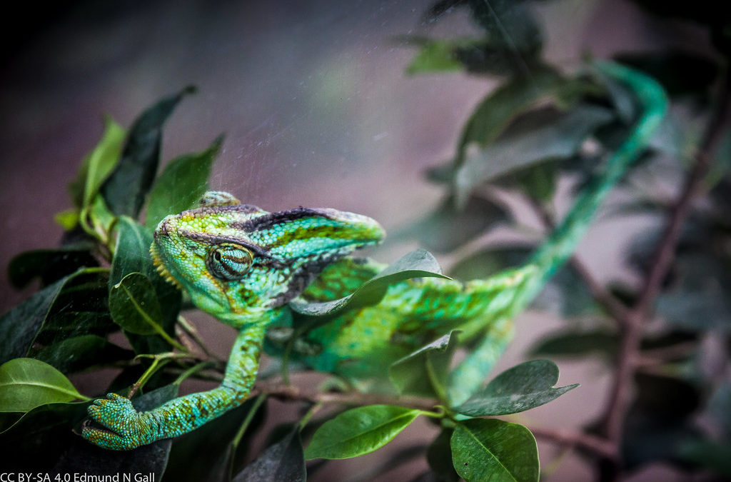 The Chameleon by Ellen Fiedler – The Poem That Might Hit You Too